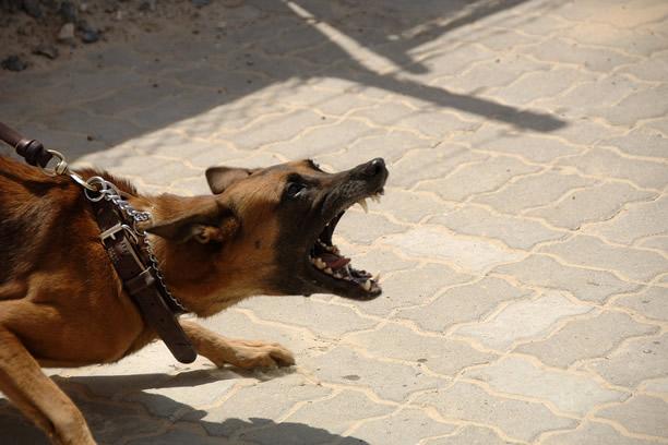 Agresywne psy