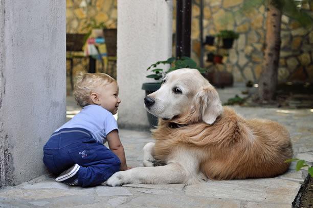 Pies – idealny czas na nowego domownika.
